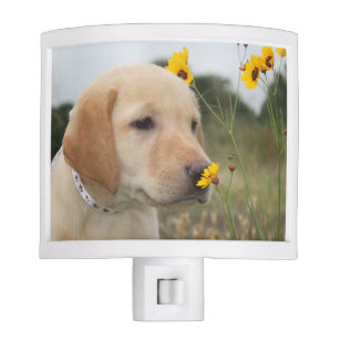 Yellow lab puppy + yellow wildflower = SMILES! Night Light