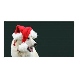 Yellow lab Santa Claus Card