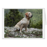yellow lab sitting.png card