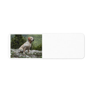 yellow lab sitting.png label