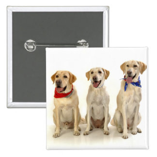 Yellow Lab Trio Buttons