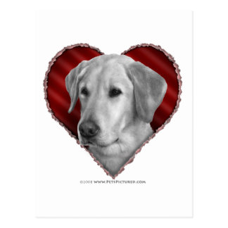 Yellow Lab with Heart Postcard