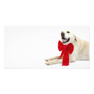Yellow labrador Christmas Photo Card