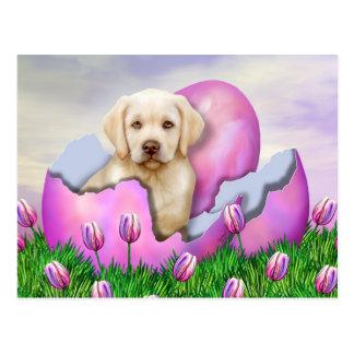 Yellow Labrador Easter Surprise Postcard