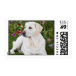 Yellow Labrador Postage