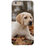 Yellow Labrador Puppy In Autumn Barely There iPhone 6 Plus Case