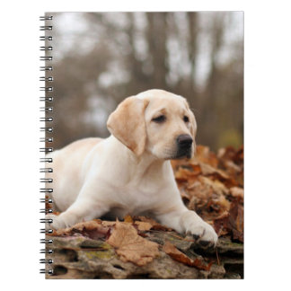 Yellow Labrador Puppy In Autumn Notebook
