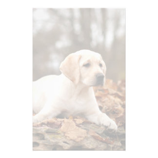 Yellow Labrador Puppy In Autumn Stationery