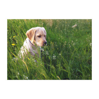Yellow Labrador Puppy in Tall Grass Canvas Print