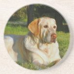 Yellow Labrador Retriever Beverage Coaster