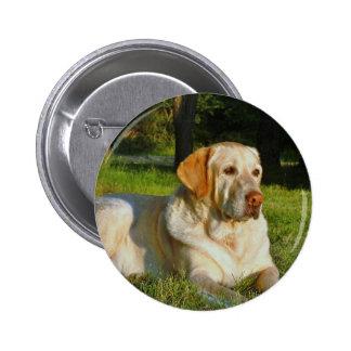 Yellow Labrador Retriever Buttons