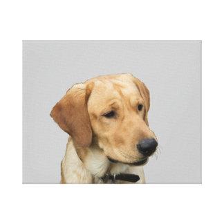 Yellow Labrador Retriever Canvas Print