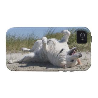Yellow Labrador Retriever iPhone 4/4S Cases