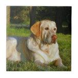 """Yellow Labrador Retriever Ceramic Tile<br><div class=""""desc"""">A photo of a mellow yellow Labrador retriever dog relaxing in a grassy meadow in the sun.</div>"""