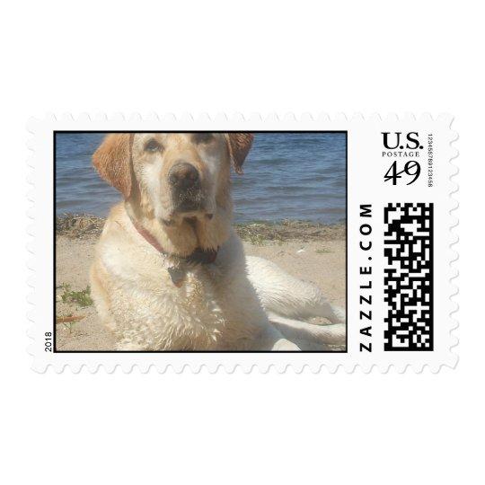 Yellow Labrador Retriever Dog Postage Stamp