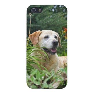 Yellow Labrador Retriever in a flower garden. iPhone SE/5/5s Case
