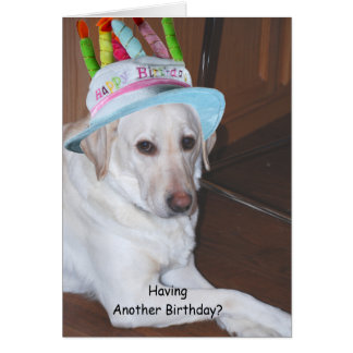 Yellow Labrador Retriever in Birthday Hat Greeting Cards