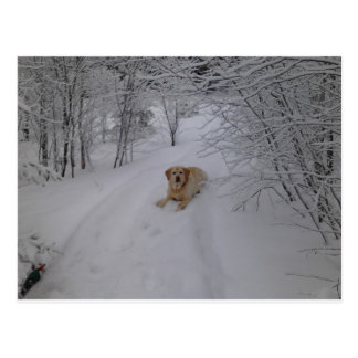 Yellow Labrador Retriever Lying in Fresh Winter Sn Postcard