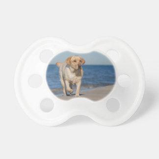 Yellow labrador retriever on the beach baby pacifiers