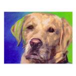 Yellow Labrador Retriever Post Card