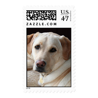 Yellow Labrador Retriever Postage