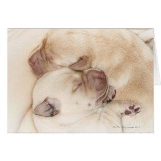 Yellow Labrador Retriever puppies, 10 days old Card