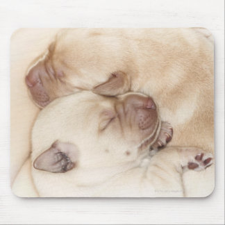 Yellow Labrador Retriever puppies, 10 days old Mouse Pad