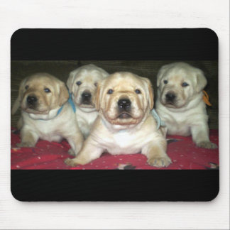 Yellow Labrador Retriever Puppies ~ Mouse pad