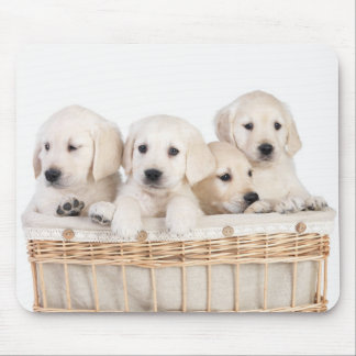 Yellow Labrador Retriever Puppies Mousepad