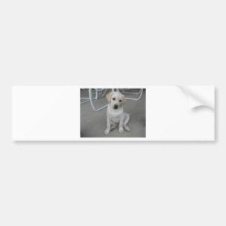 Yellow Labrador Retriever Puppy Bumper Sticker