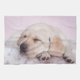 Yellow labrador retriever puppy kitchen towel