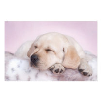 Yellow labrador retriever puppy stationery