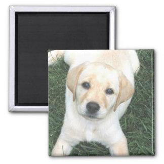 Yellow Labrador Retriever Refrigerator Magnet