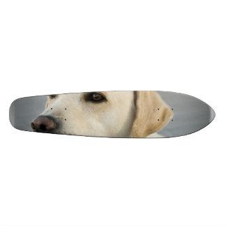 Yellow Labrador Retriever Skateboard