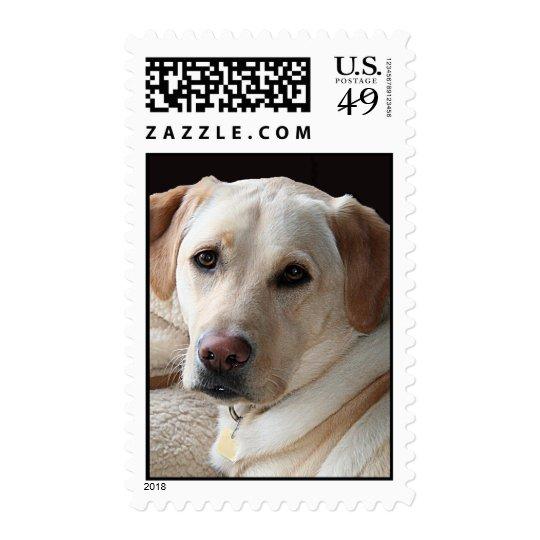 Yellow Labrador Retriever Stamp