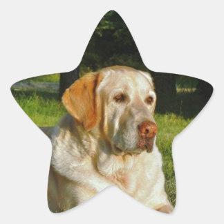 Yellow Labrador Retriever Star Sticker