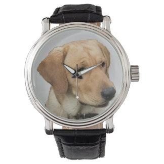Yellow Labrador Retriever Watch