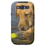 Yellow labrador with a tennis ball in the water samsung galaxy SIII cases