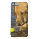 Yellow labrador with a tennis ball in the water barely there iPhone 6 case