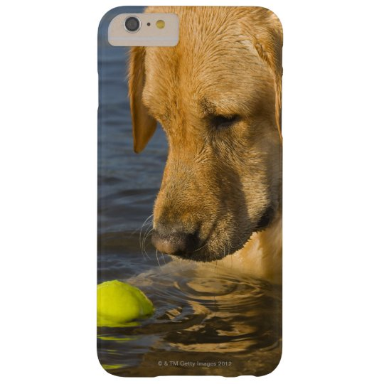 Yellow labrador with a tennis ball in the water Case-Mate blackberry case