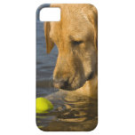 Yellow labrador with a tennis ball in the water iPhone 5 covers