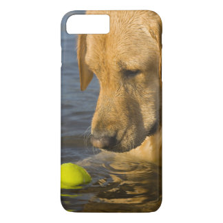 Yellow labrador with a tennis ball in the water iPhone 7 plus case