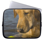 Yellow labrador with a tennis ball in the water laptop sleeves