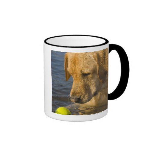 Yellow labrador with a tennis ball in the water coffee mugs