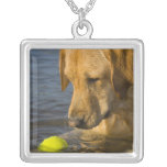 Yellow labrador with a tennis ball in the water necklace