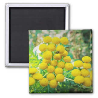 Yellow Lady Bug on Tansy Flowers Magnet