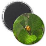 Yellow Ladybug Magnet