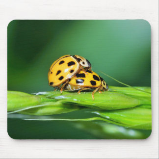 Yellow ladybugs mouse pad