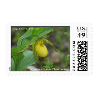 Yellow Lady's Slipper Postage Stamp