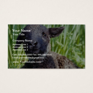 yellow Lamb in springtime, England flowers Business Card